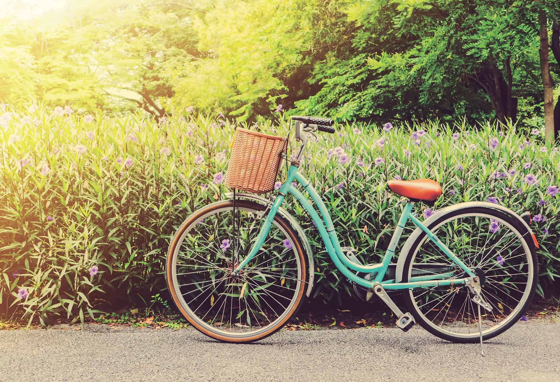 Mint beach cruiser style bicycle on path beside field of flowers.