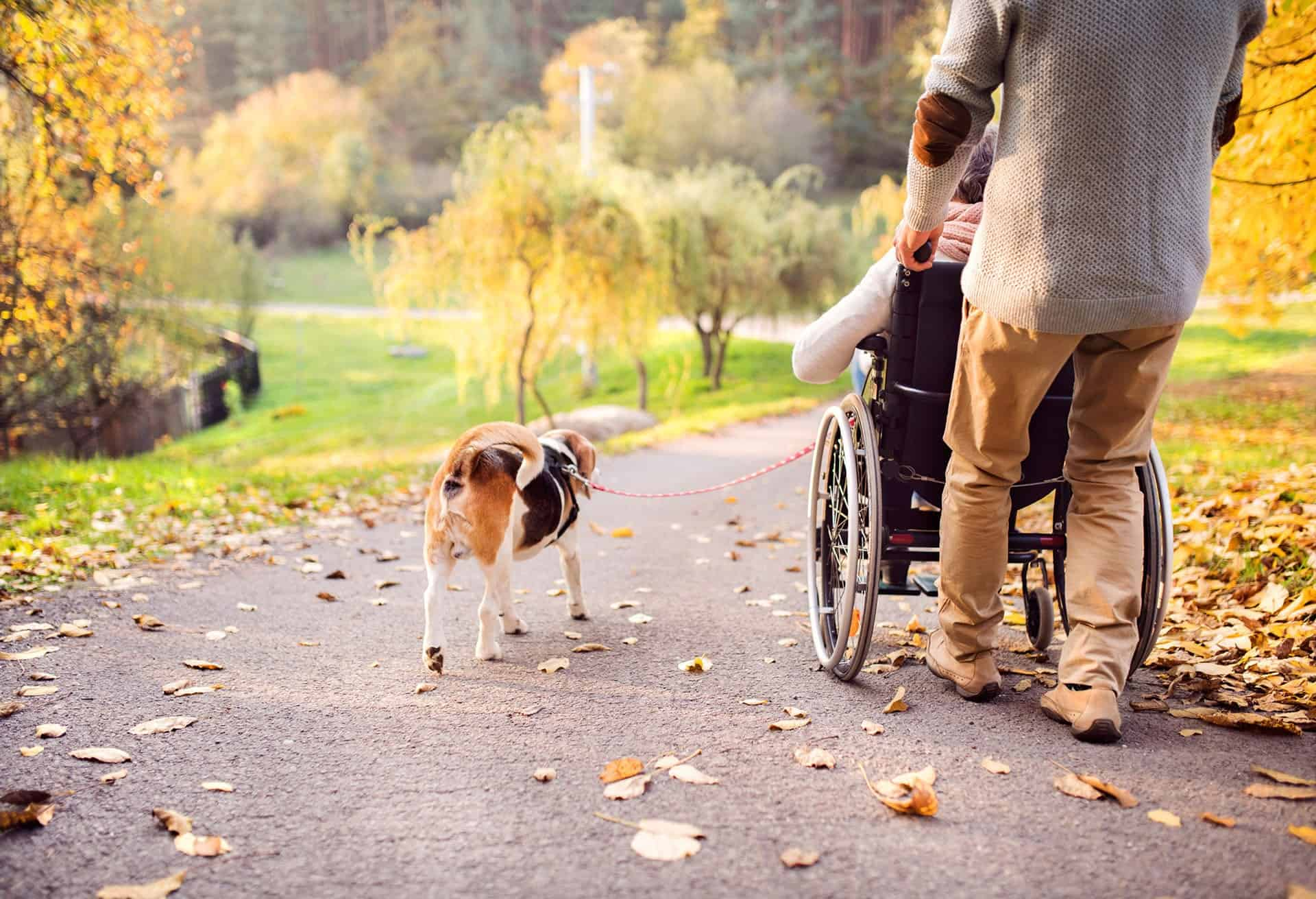 Man pushing woman in wheelchair and walking a dog on autumn path.