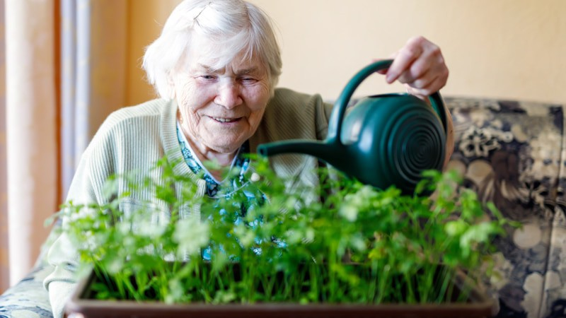 Benefits of indoor plants senior