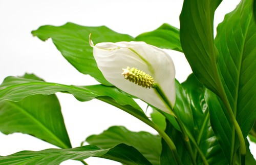 5 Indoor plants that can grow in your laundry room