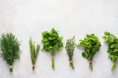 A lineup of delicious herbs