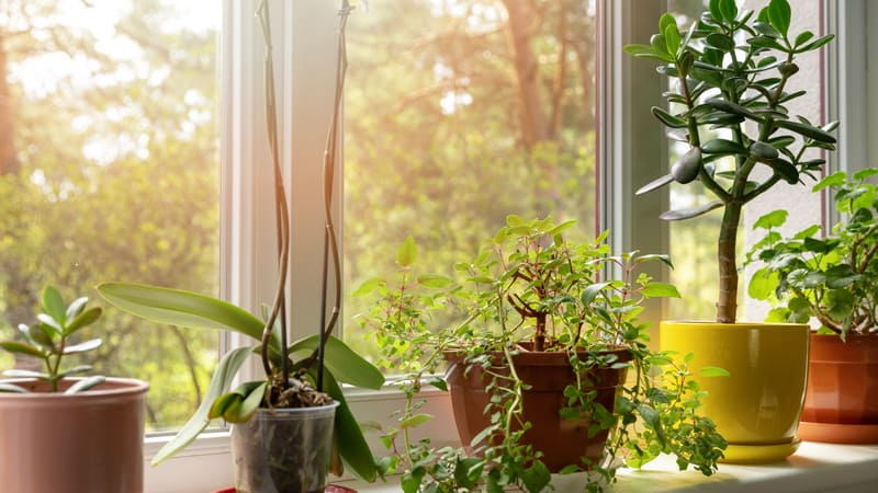 Plants for the windowsill