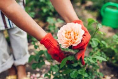 Senior gardening in her outdoor space