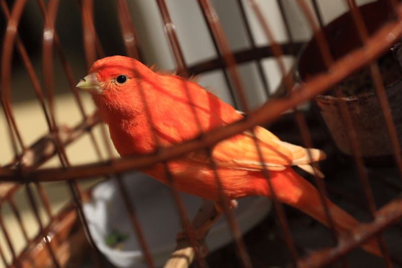 A bird, or one of the best pets for seniors