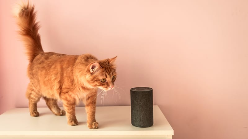 Amazon Alexa for seniors with a cat