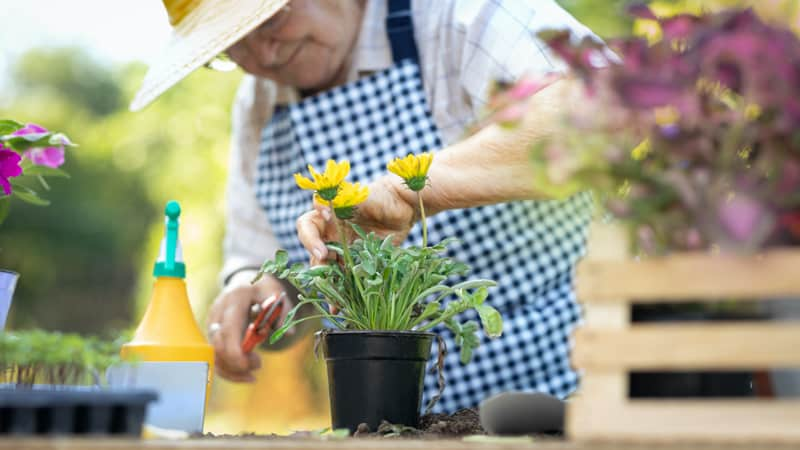 Elderly woman using some of the best gardening tools for seniors