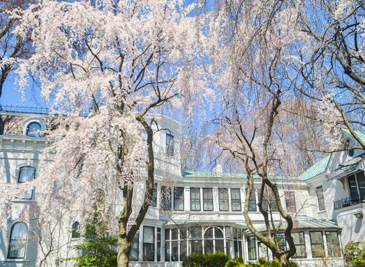 Baker Hunt Art and Cultural Center Exterior Cherry Blossoms