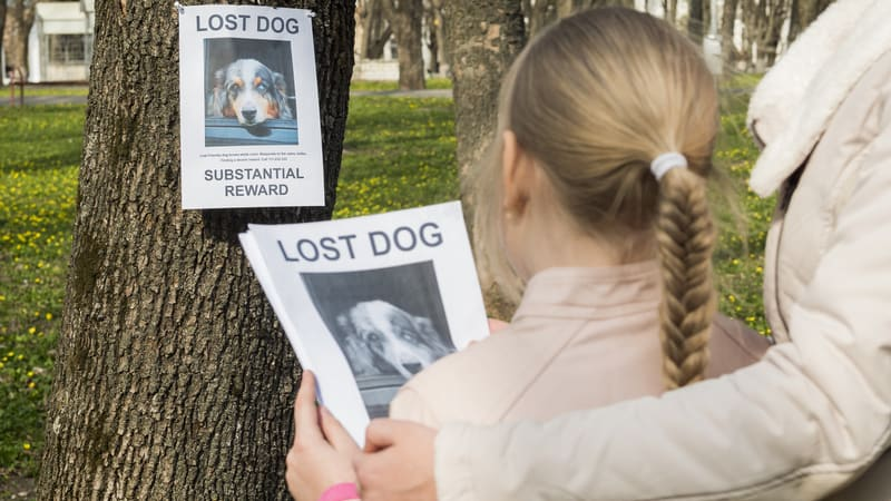 Girl is wondering how do I find my lost dog?
