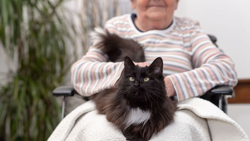 Elderly woman uses pet care products for seniors to care for her cat