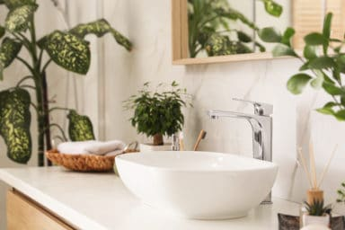 These are some of the best plants for your bathroom